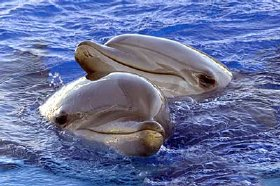 DELFINES delfines sobrepesca contaminación matan