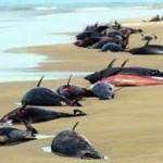 Suicidio masivo de delfines en Irán