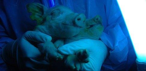 crías fluorescentes