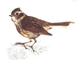 pájaros invernantes