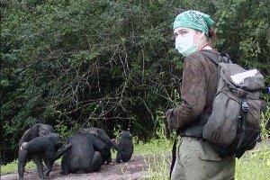 Monos Antropomorfos