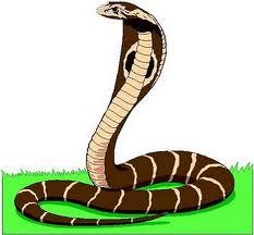 El veneno de las serpientes varía según su edad y entorno