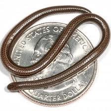 Serpiente MAS pequeña