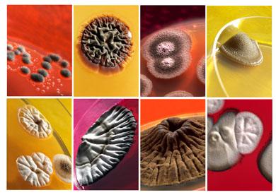 Alimentos seguros protegerse de Bacterias y Virus. Siempre Alimentos seguros gracias OZONO. Alimentos seguros