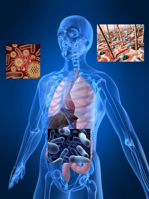 Bacterias En El Cuerpo Humano - Lessons - Tes Teach