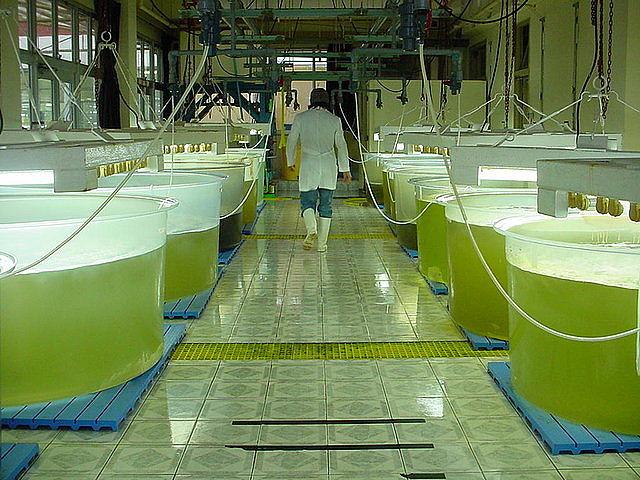 Investigadores de la UPM cultivan algas para mitigar las emisiones de CO2