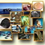 La función de los océanos en la alimentación de la población mundial