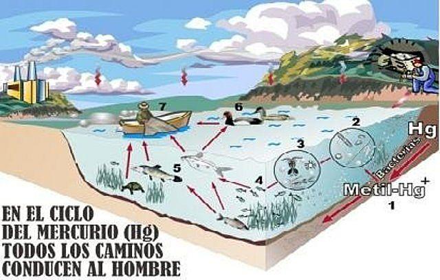 Mercurio contamina el agua del mar
