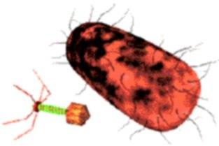 bacterias para replicarse
