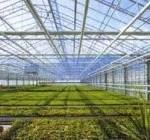 OZONO potente gas para DESINFECTAR suelos agricolas