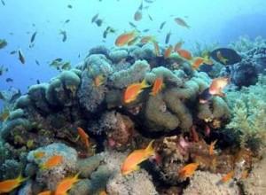 La Acidificación del Mar Amenaza la Base de Ecosistemas