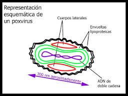 virus Viruela