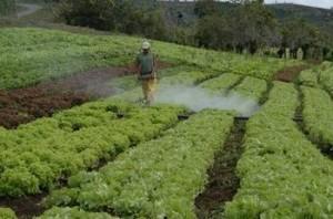 PLAGAS toxicos agricultura