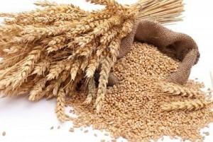 agricultura granos trigo