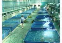 La acuicultura y el OZONO