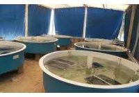 Waitrose Apoya el Criadero Nacional con el uso de OZONO en el cultivo de Langosta