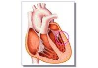 Un virus común puede producir hipertensión