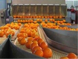 Proceso de Naranja y Mandarina